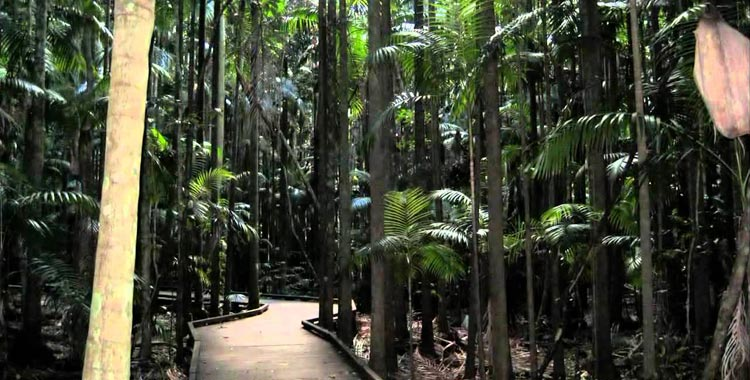 Maleny things to do
