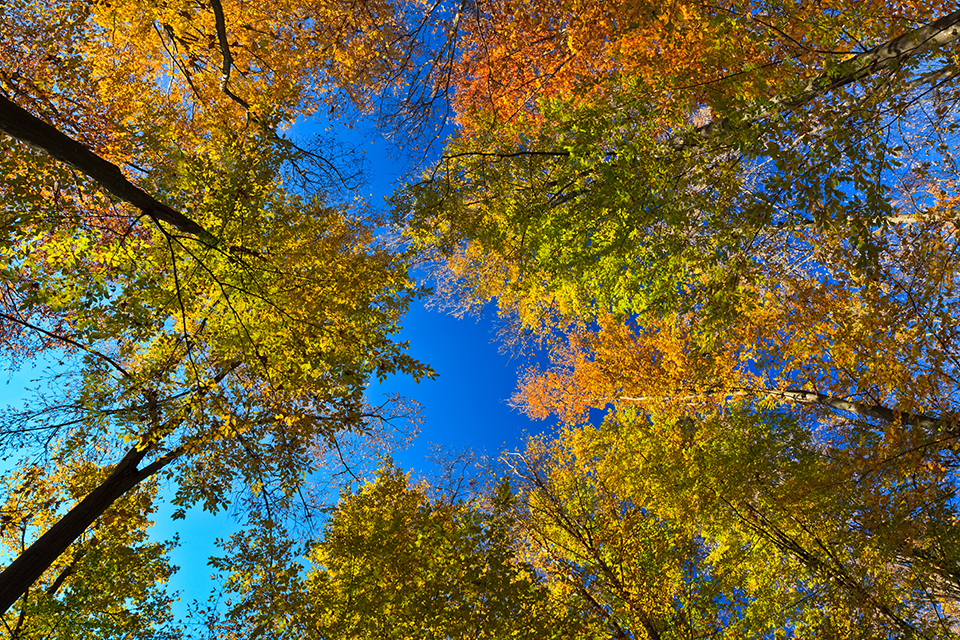 projection on the sky of autumn trees
